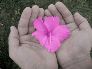 resized_Flower_in_hands
